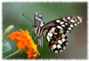 Papillon jardin Perpignan (Pyrénées Orientales 66)