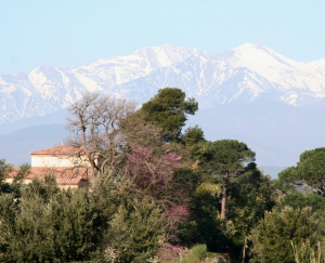 Canigou et un mas proche de Perpignan (Pyrénées Orientales 66)